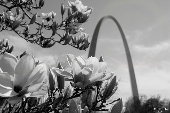 Spring flowers and Arch